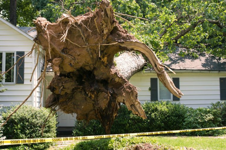 Columbus, Ohio storm damage restoration contractor needed due to tree falling on house gets roof replaced by insurance company.